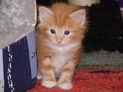 Alexseij im Alter von vier Wochen
