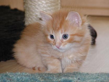 Alijoscha im Alter von vier Wochen