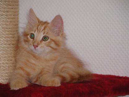 Alijoscha im Alter von elf Wochen