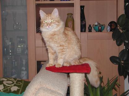 Alijoscha im Januar 2002