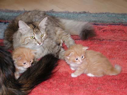 Babushka, Bajara und Anni 17.5.2002