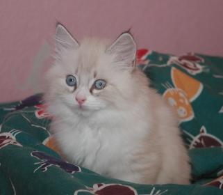 Belushi 25.10.2009