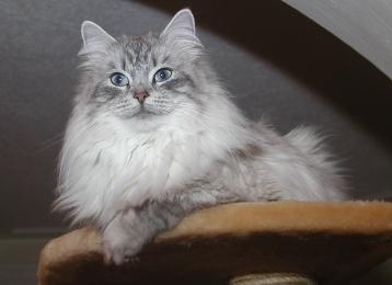 Benisha vom Baikalsee