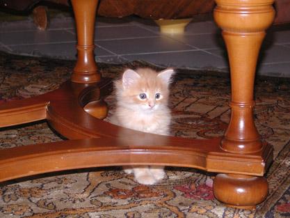 Dimitri 15.2.2004