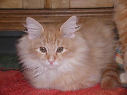 Dimitri 12.4.2004