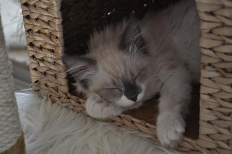 Finn 23. Juni 2011