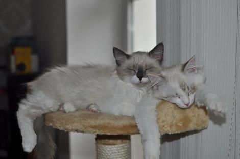 Finn und Fee 23. Juni 2011