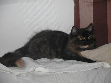 Fedotia 29.08.2010