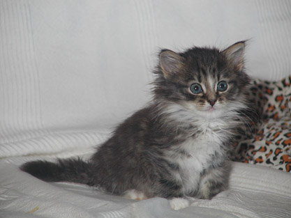 Greta 4. Juni 2011