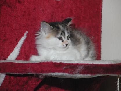 Hermine 29. Mai 2011