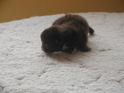 Igor 1 week old