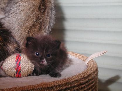 Igor 3 weeks old