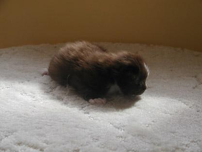 Ian 2 weeks old