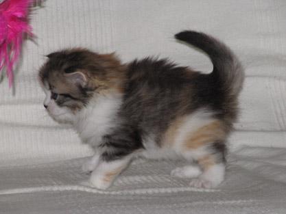 Ivana 27.11.2011