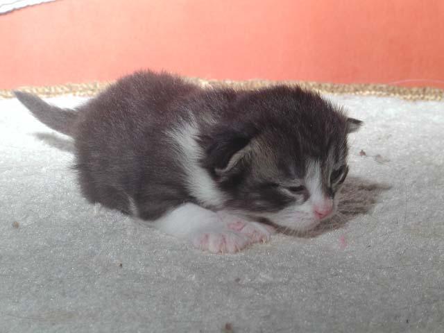 Karlos 13.05.2012