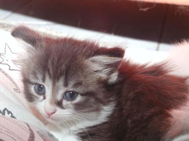 Karlos 05.06.2012