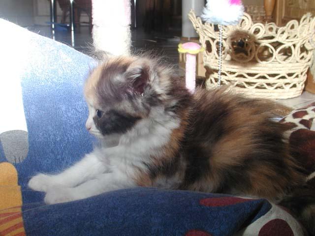 Kathi 11.06.2012