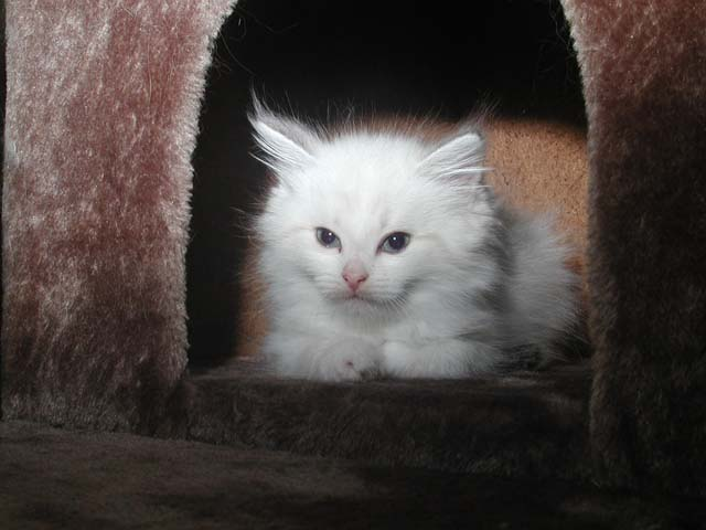 Konstantin 17.06.2012
