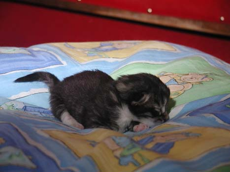 Leon 22.4.2007