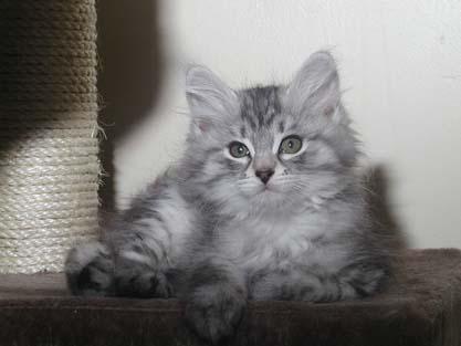 Lancelot 18.07.2012