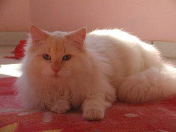 Delicous Cat Lukian