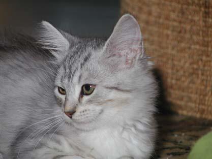 Molly 02.09.2012