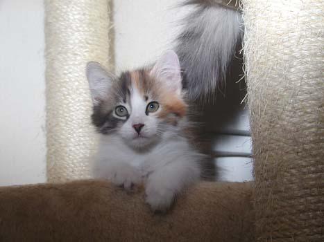 Uljana-Fiona 31.8.2008