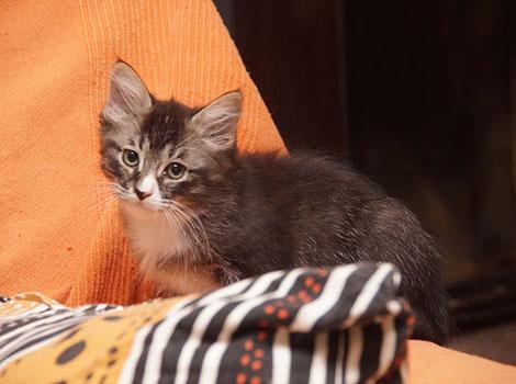 Xhavit am 6.12.2015
